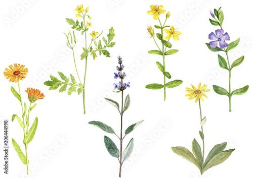 Photo Watercolor drawing medicinal plants