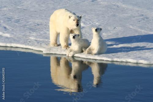Recess Fitting Polar bear Family photo