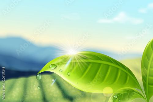 Green tea plantation background Wallpaper Mural