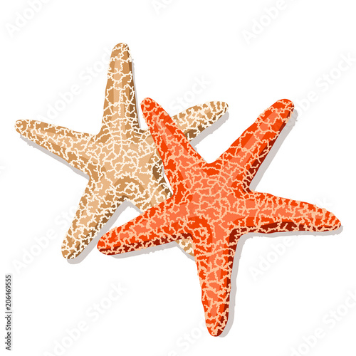 Starfish isolated on white background. Vector illustration. Wallpaper Mural