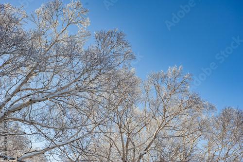 Fotografía  北海道の雪景色