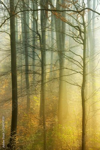 klimatyczny-las-ze-swiatlem-slonecznym-rozproszonym-przez-poranna-mgle