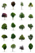 Collection of trees on white Background in high resolution