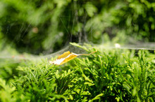 Bush Bush Leaves Spider Web Green Background