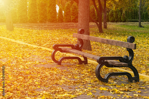 Wall Murals Cemetery Empty bench in the autumnal park on background of yellow fallen leaves and avenues with trees and thujas with sunlight. Loneliness, sadness, autumn depression concept