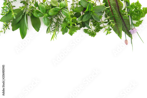 Cadres-photo bureau Condiment Fresh garden herbs isolated on white background