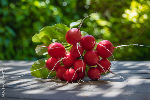 Bunch of fresh round radish on the table in the garden, large bunch of fresh organic vegetables, raphanus sativus
