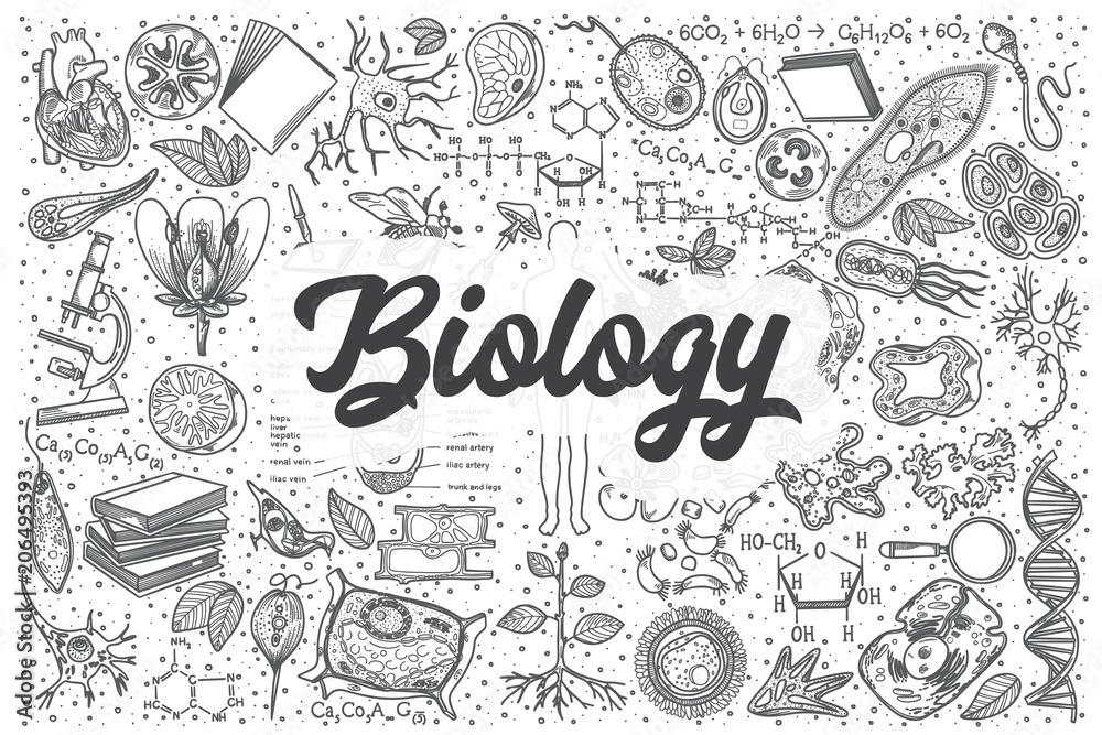 Fototapeta Hand drawn biology vector doodle set.