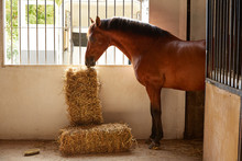 Brown Horse At Stable Eating A...
