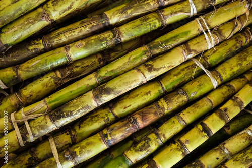 Stalks of sugarcane Fototapet