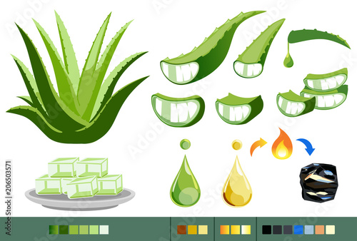 Photo  Properties of Aloe Vera concept. Processing of medicinal plants.