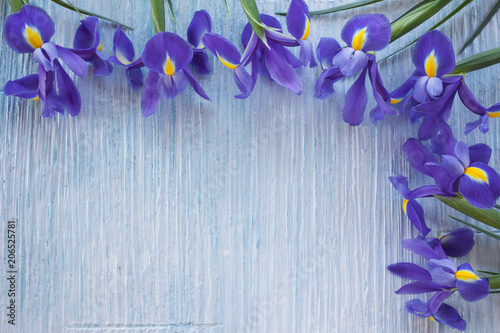 Background with blue iris flowers for congratulations, invitations