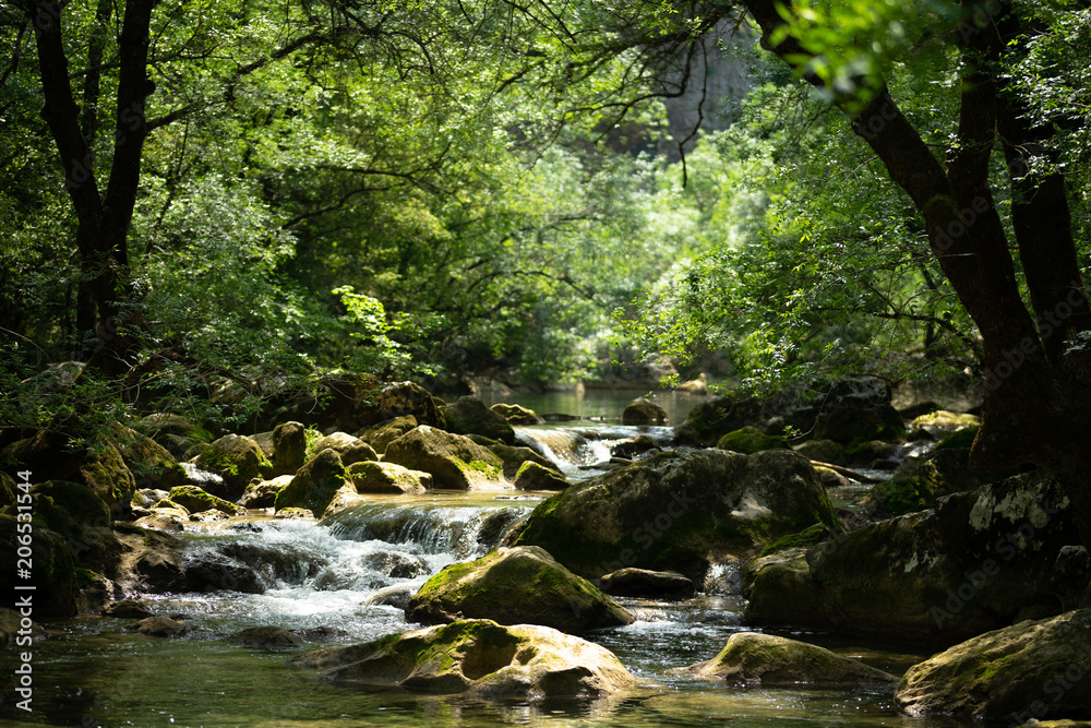 une petite cascade au milieu d'une végétation luxuriante