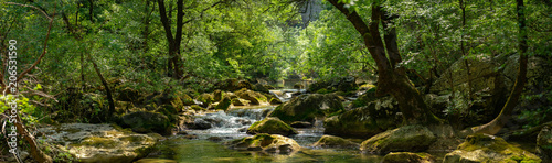 Cadres-photo bureau Rivière de la forêt panorama sur une rivière et son environement luxuriant
