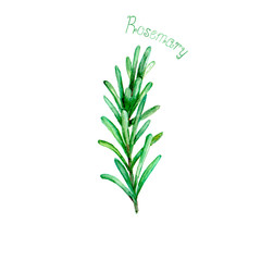 Fototapeta Przyprawy Rosemary herb spice isolated on white background