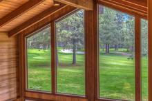 Trees Through A Window