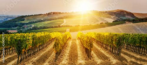 Fotografie, Obraz Vineyard landscape in Tuscany, Italy.