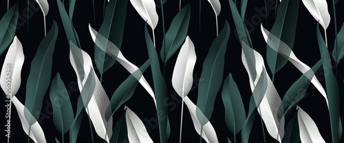 Tropical plant seamless pattern, white and green Bird of paradise leaves on black background