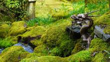 Dragon Water Fall