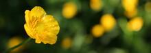 красивый желтый ...