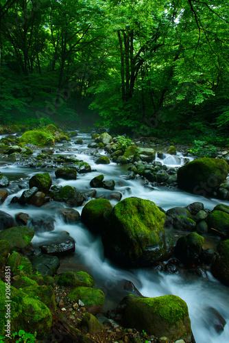 Aluminium Prints Forest river photo