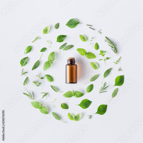 Photo sur Toile Condiment Bottle of essential oil with round shape of fresh herbs and spices basil, sage, rosemary, oregano, thyme, lemon balm and peppermint setup with flat lay on white background