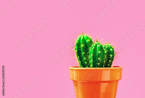 Foto op Canvas Cactus Cactus in a pot