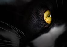Black Cat's Eyes. Yellow Eyes Of Black And White Cat.