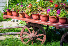 Beautiful Flowerbed On The Old Cart