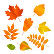 Vector set with autumn leaves.