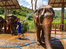 Young Men Washes An Elephant At Sanctuary In Chiang Mai Thailand