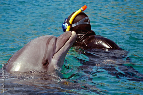 the dolphin emerged from the water. snorkeling and  swimming with dolphin in the sea or pool