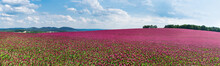 Spring Panorama Of Flowering C...