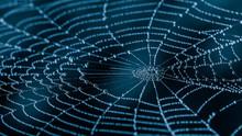 Wet Spiderweb With Beads Of De...