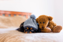 Small Dog On A Bed With A Teddy Bear