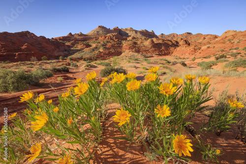 Staande foto Oranje Spring wildflowers in the Utah desert, USA.