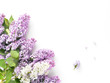 Flowering lilac isolated on white background, top view, flat layout, copy space.