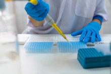Close-up For Hands Of A Researcher Pipetting Samples In Micro Plate; Woman Scientist In Lab Holding A 96 Well Plate With Samples For Analysis.