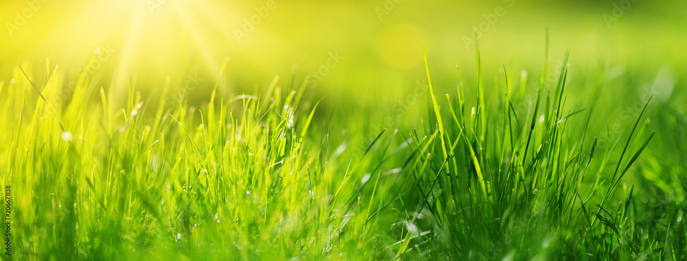 Fototapety, obrazy: Fresh green grass background in sunny summer day