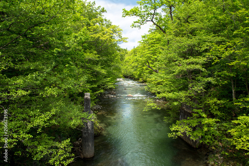 Poster Rivier 森の中の川