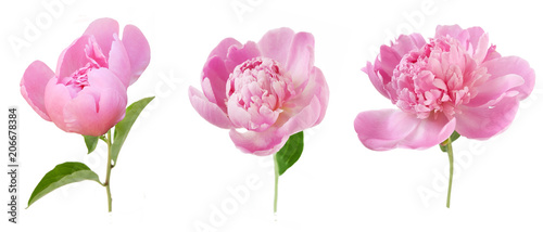 peony flowers bunch  isolated on white background Fototapete