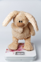 A Soft Toy Rabbit  Stands On The Scales.