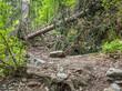 nach dem Sturm: entwurzelter Baum im Schwarzwald