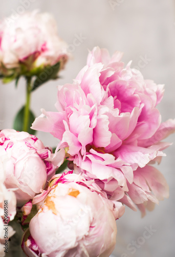 bunch of pink peony flowers on light background
