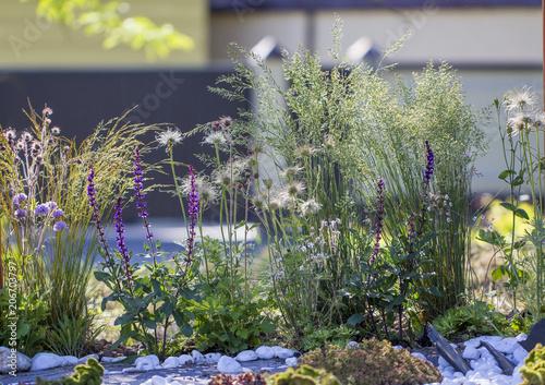 Foto op Aluminium Aubergine Blossom with stones and flowers Use of building debris in landscape design