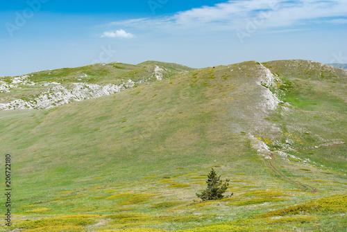 Foto op Canvas Pistache Spring landscape with alpine meadows near Chatyr-Dah mountain in Crimean peninsula, Ukraine