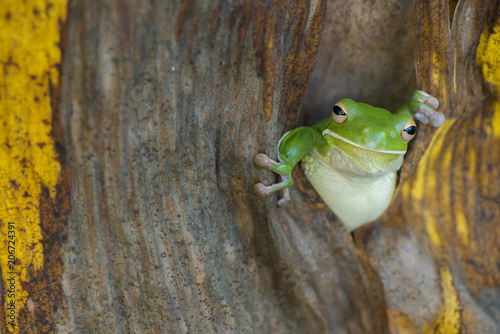 Tuinposter Kikker Good Morning Frog
