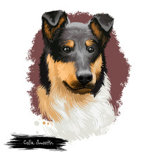 Smooth Collie Dog Digital Art ...