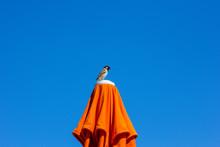 Little Bird Sitting On A Beach...