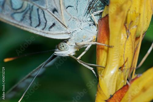 Foto op Plexiglas Macrofotografie Macro Photography - A Beautiful Butterfly close up